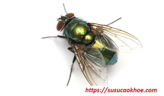 Nằm mơ thấy con ruồi là điềm gì, đánh con gì?