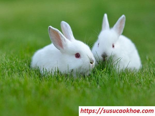 Nằm mơ thấy con thỏ là điềm gì, đánh con gì?