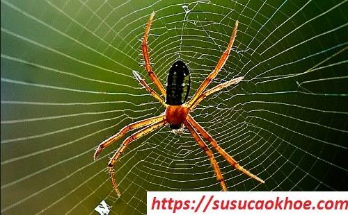 Nằm mơ thấy nhện là điềm gì, đánh con gì?