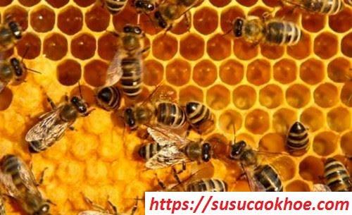 Nằm mơ thấy ong là điềm gì, đánh con gì?